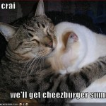 Don't cry, we'll get cheezburger someday...