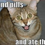 Very happy cat ate some pills