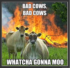 Bad cows, bad cows, whatcha gonna moo