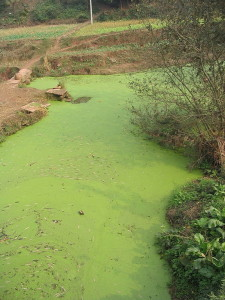 Algal Bloom of Death