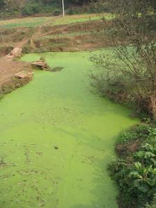 Algal Bloom of Death