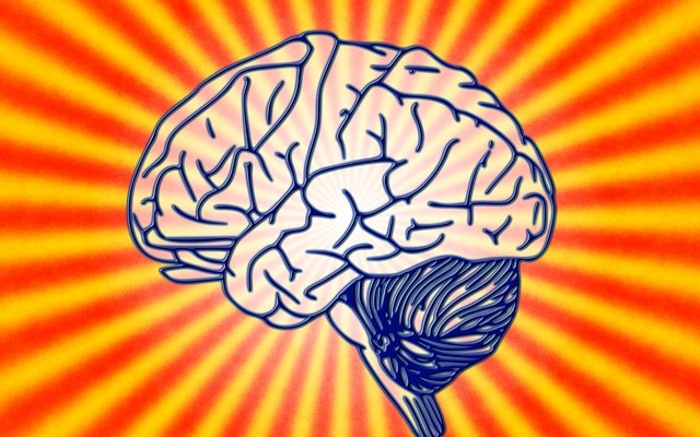 The lump of meat inside your head, aka - the brain