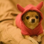 Make Shitloads of Money Online Without Chihuahuas