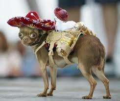 sombrero chihuahua