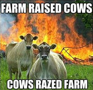 farm raised cows, cows raised farm.