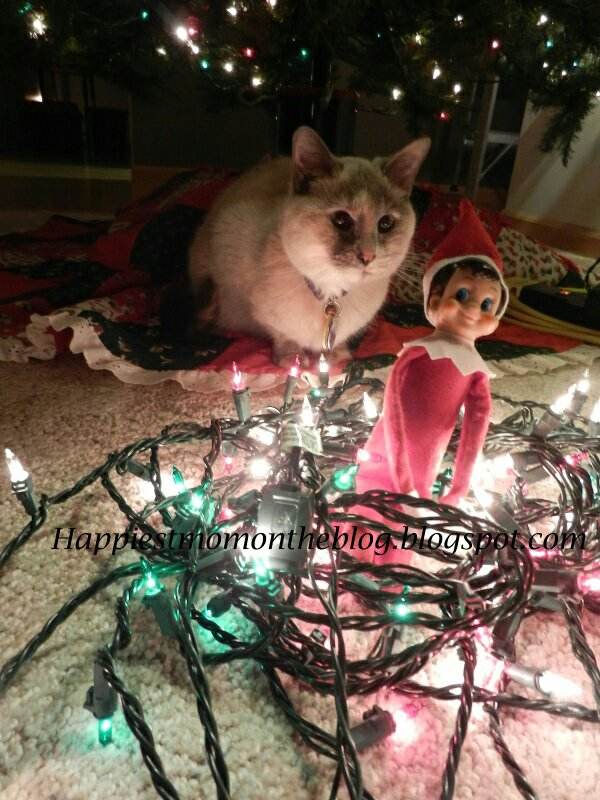 Elf causing more mischief than cat...